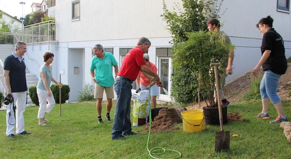 Heiliger Bambus Geflanzt Evangelische Kirchengemeinde Erlenbach